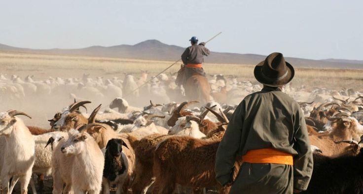 nomadic-life-of-mongolian